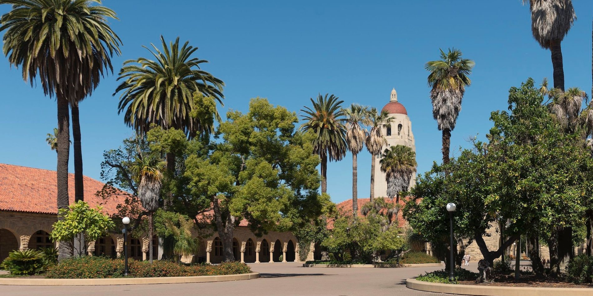 Main Quad, palm trees, Hoover Tower